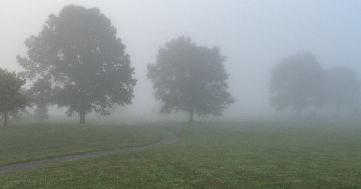 Foggy field with trees