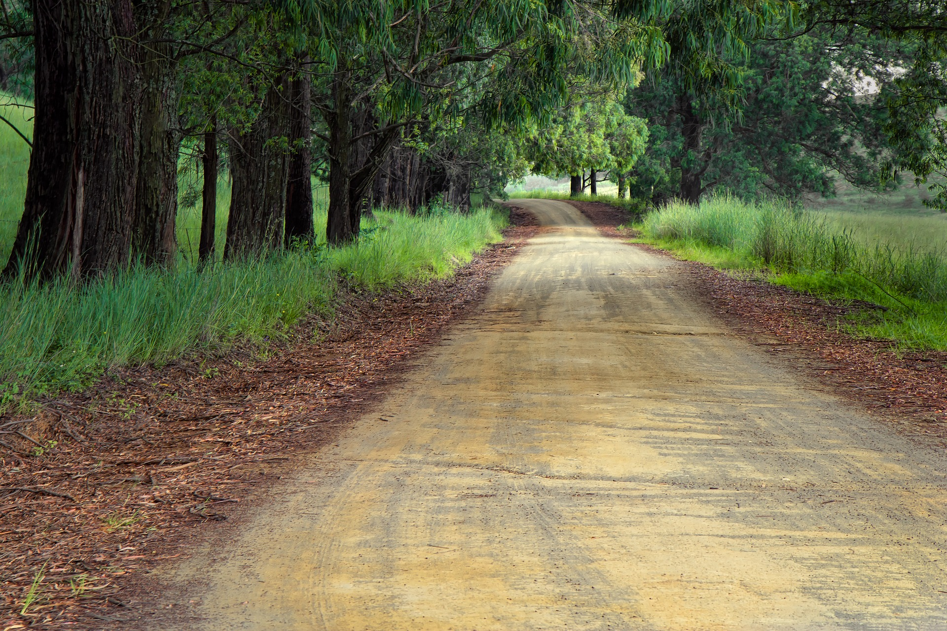 a tree-lined dirt road in the country